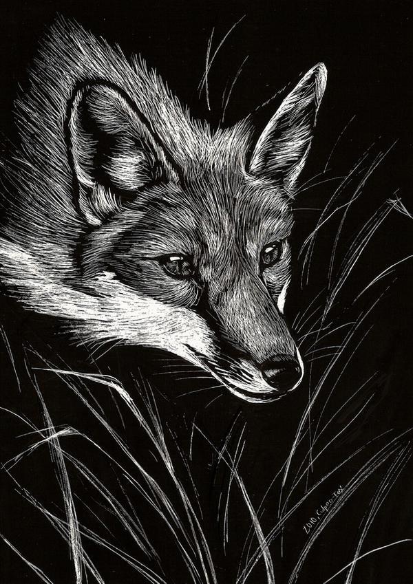 Scratchboard Fox by Culpeo-Fox