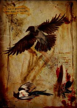 Magpie's trace. Crow's voice.