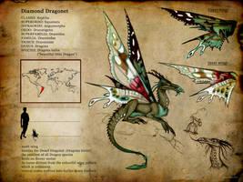 Dragona kallis by Culpeo-Fox