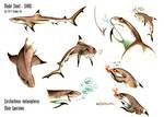 Blacktip Reef Shark - Sheet Siarc