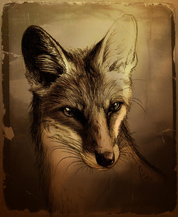 Fuchs by Culpeo-Fox