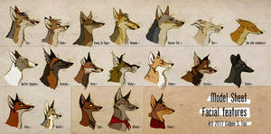 Foxes And Facial Features