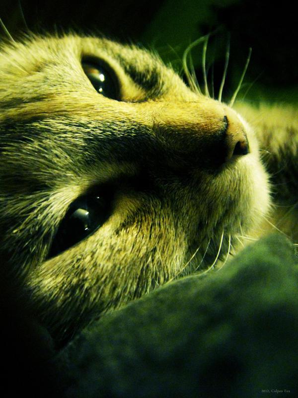 Green Shade by Culpeo-Fox