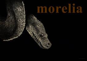 Morelia by Culpeo-Fox