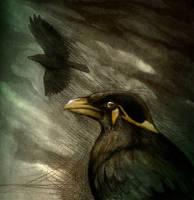 Storm Bird by Culpeo-Fox