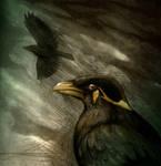 Storm Bird