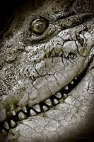 Godzilla by Culpeo-Fox