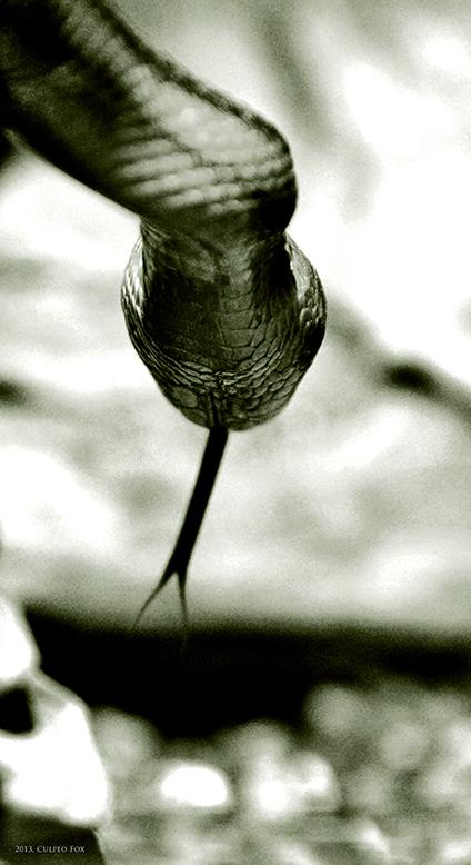 Ophiolatreia by Culpeo-Fox