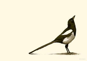 Magpie by Culpeo-Fox