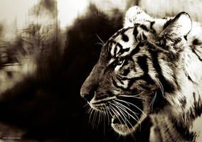 Tiger Tiger by Culpeo-Fox