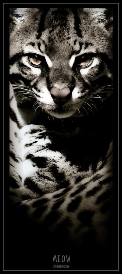 Meow by Culpeo-Fox