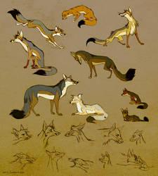 Culpeo Foxes by Culpeo-Fox
