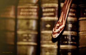 Book Snake by Culpeo-Fox
