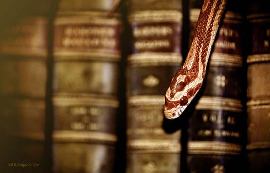 Book Snake