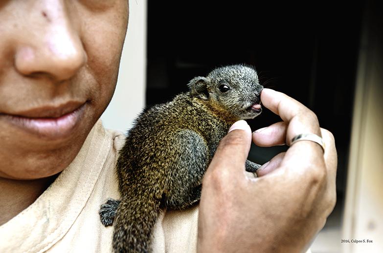 Pallas's Squirrel by Culpeo-Fox