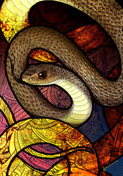 Indo-Chinese Rat Snake