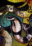 Indo-Chinese Spitting Cobra