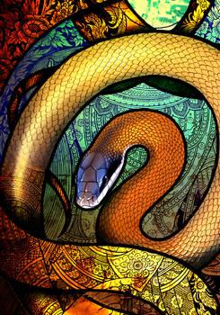 Cave-Dwelling Rat Snake