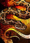 Siamese Viper
