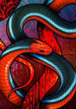 Blue Coral Snake