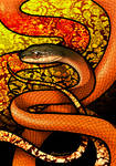 Black-Headed Cat Snake by Culpeo-Fox