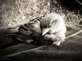 Birdie by Culpeo-Fox