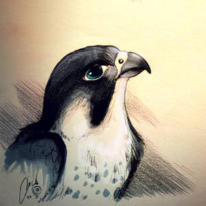 The Blue-Eyed Falcon