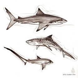 Sketchy Sharks