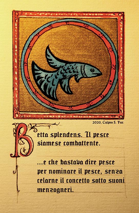 The Illuminated Betta Fish