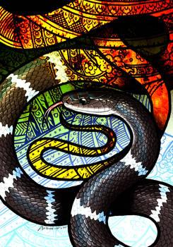 White-Banded Wolf Snake