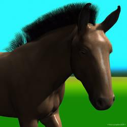 She's a mule