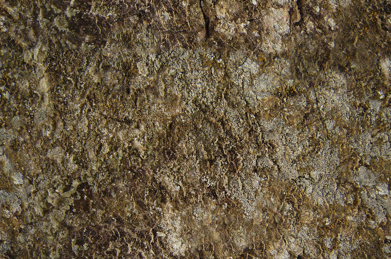 seamless texture rock and moss by koncaliev on DeviantArt