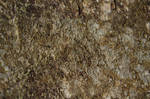 seamless texture rock and moss