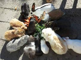 Sanctuary bunnies by Pupaveg