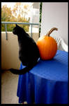Halloween-cat Timon