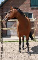 Horse Stock 02. by BillTokioHotel