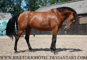 Horse Stock 03. by BillTokioHotel