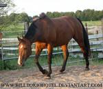 Horse Stock 19.