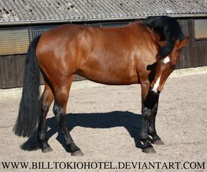 Horse Stock 27.