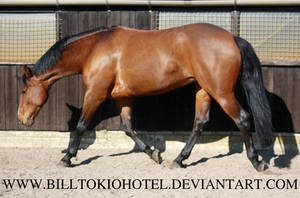 Horse Stock 30. by BillTokioHotel