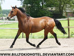 Horse Stock 47.