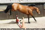 Horse Stock 48.