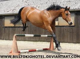 Horse Stock 63. by BillTokioHotel