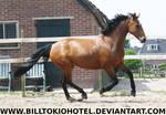 Horse Stock 64.