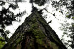 Tree by ryanhatfield