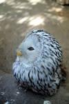 Owl by Pianist-Kira