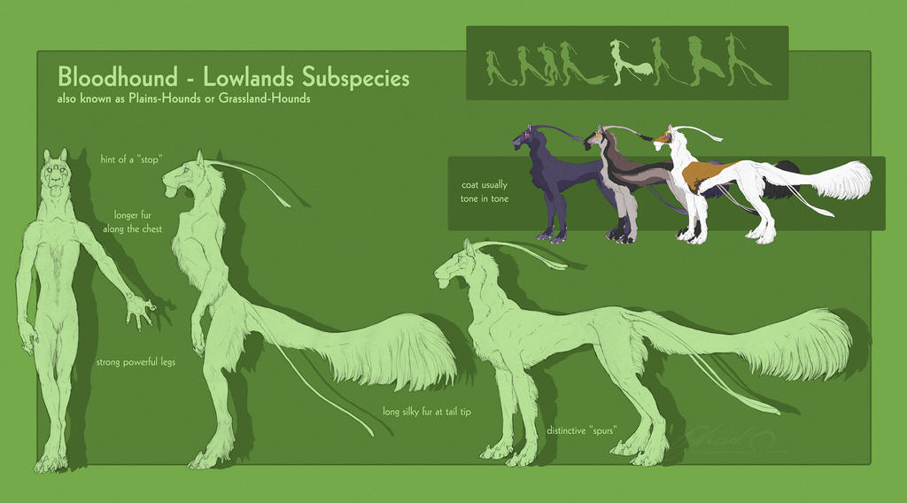 Bloodhound - Lowlands Subspecies by BloodhoundOmega