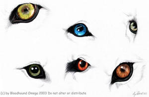 Wolf Eyes Study by BloodhoundOmega