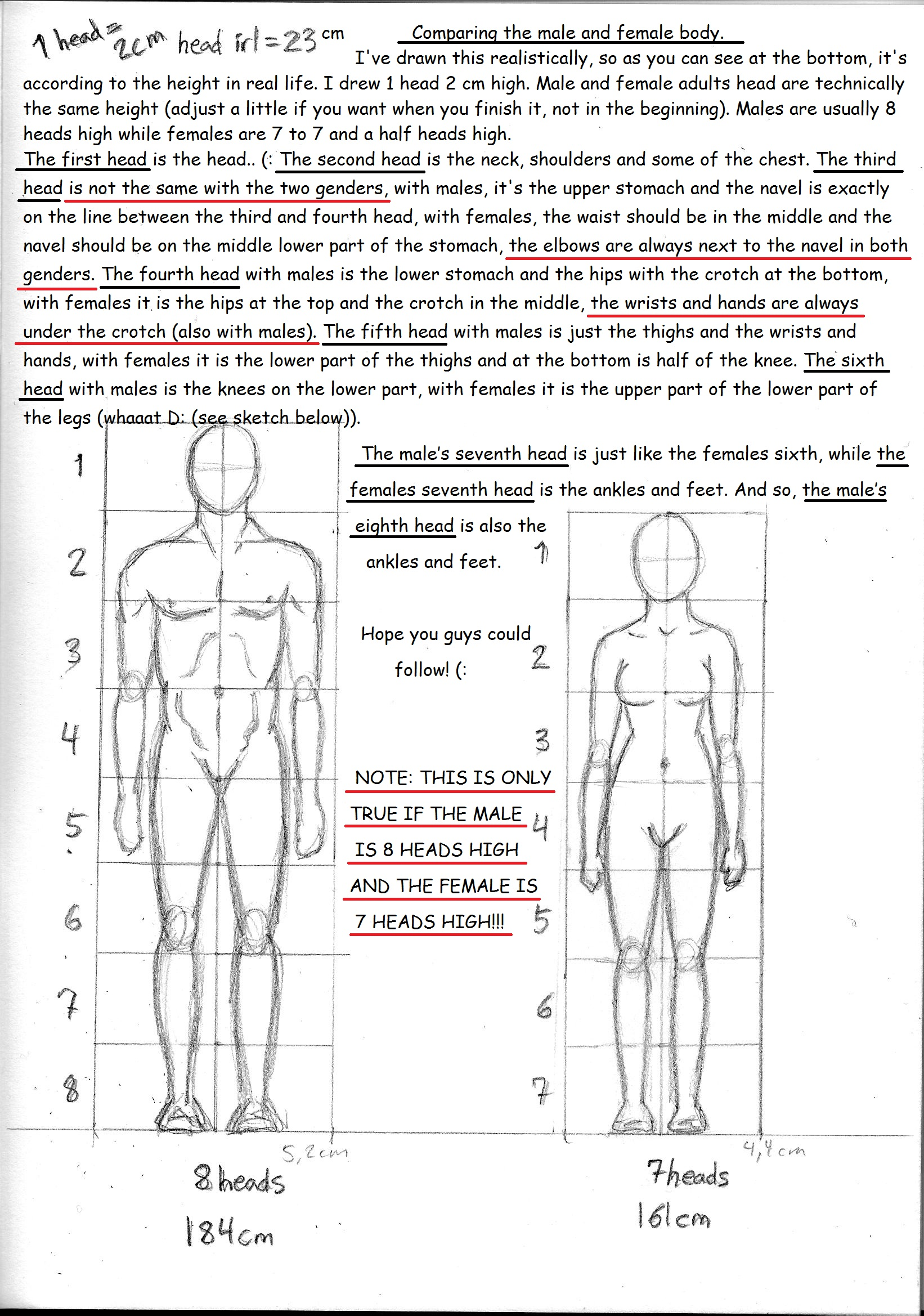 Male And Female Anatomy Guide Between Differences By Ninawesth On
