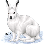 Arctic Hare by hansoloqt